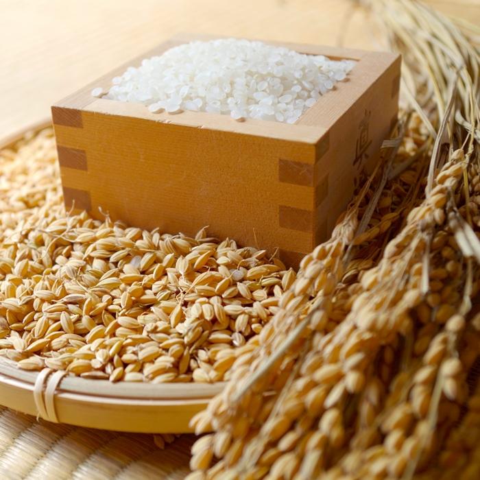 稲、お米、枡